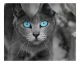Ole' Blue Eyes
