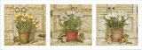 Potted Flowers  Three Panels I
