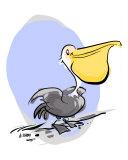 Paulo the Pelican