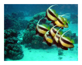 Pennant Fish