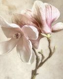 Pink Magnolia I