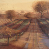 Vineyard Vista