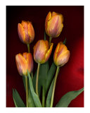 Tulips on Red