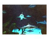 Tranquil Sharks