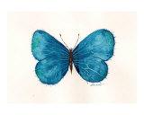 Butterfly 557