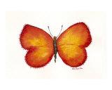 Butterfly 538