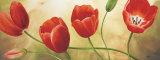 Armonia di Tulipani