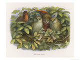 An Elf Fraternises with the Owls