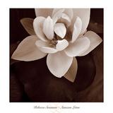 Amazon Lotus Reproduction d'art par Rebecca Swanson