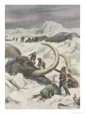 Two Mammoths are Found Frozen in the Jamalm Peninsula 2400 Kilometres North of Saint Petersburg