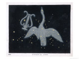 The Constellation of Cygnus  a Flying Swan  and Lyra  That of an Ancient Greek Lyre
