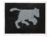 Ursa Major: The Constellation is Composed at First Sight of Seven Conspicuous Stars