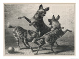 Three Jackals Playing Together