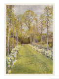 Looking Down a Grass Path with a Bed of Daffodils and Trees on Either Side
