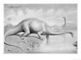 Diplodocus CarnegII Which at 28 Metres Long was the Greatest Known Dinosaur