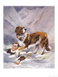Saint Bernard Finds a Man Trapped in the Snow