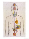 The Seven Chakras and the Streams of Vitality