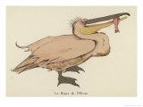 Pelican Catches a Fish