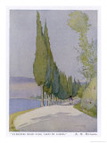 Row of Cypress Trees Edge the Path Near Salo Lake Garda