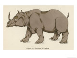 Female Rhinoceros of Sumatra