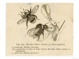 Humble Bees