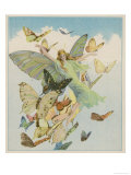 Fairy Flying with Butterflies Giclée premium