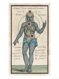 Theosophy Chakras 1696