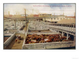 Cattle Awaiting Slaughter in the Union Stock Yards Chicago  Note the Boards for Armour and Swift