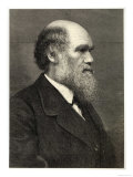 Charles Darwin Naturalist