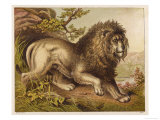 Fierce-Looking Lion from the Atlas Mountains of North Africa