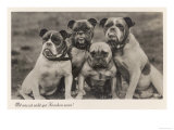 Group of Four Bulldogs Sitting Close Together