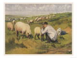 Shepherd in a Meadow with His Dog and His Sheep