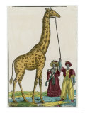 Giraffe at Paris 1826