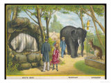 Regent&#39;s Park Zoo London Visitors Admire the White Bear the Elephant and the Kangaroo