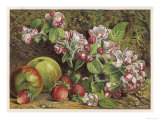 Apples and Strawberries with Blossom to Represent the Months of May and June