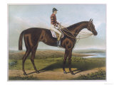 Winner of the Derby and St Leger in 1881