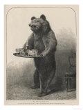 Bear Waiter