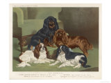 Four King Charles Spaniels One of Each Colour: 1 Blenheim 2 Black and Tan 3 Ruby 4 Tricolour
