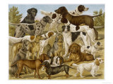 Large Assortment of Dogs: Including:Hounds Setters and Spaniels