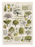 Decorative Page Showing Fruit Trees and Ways to Cultivate Them