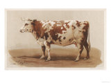 French Cow 1862