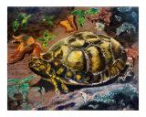 101406 Mr Tortoise