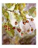 Acorns & Oak Leaves