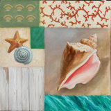 Shell Collage II