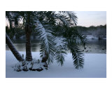 Christmas Morning 2005-Snow & Palm Trees & Ducks