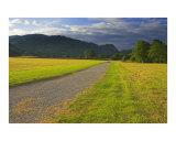 England  Cumbria  Lake District National Park  The Cumbria Way Track near Coniston