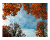 Orange hues of autumnal trees 1