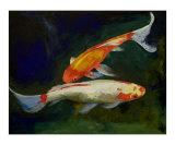 Feng Shui Koi Fish