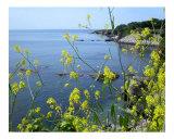 Newport  Rhode Island Ocean View