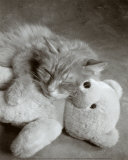Nap with Teddy